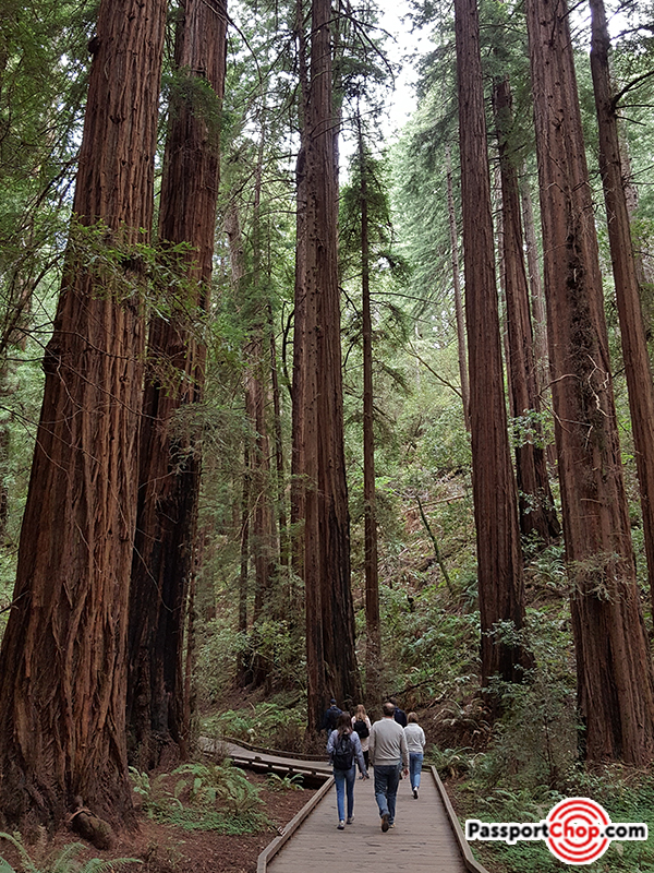 majestic-muir-woods-redwoods-san-francisco