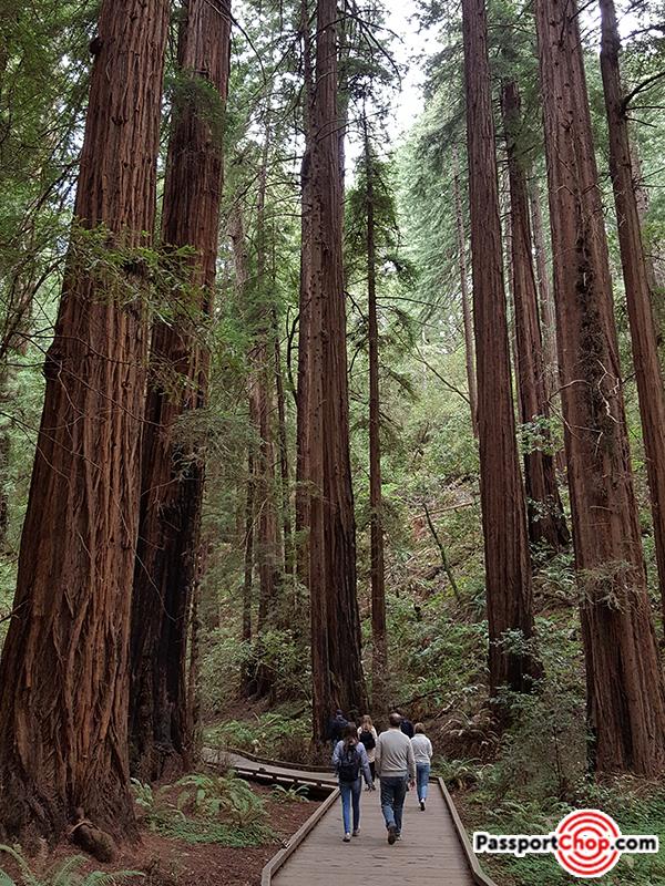 majestic-muir-woods-redwoods-san-francisco