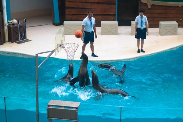 farglory ocean park dolphin sea animal train