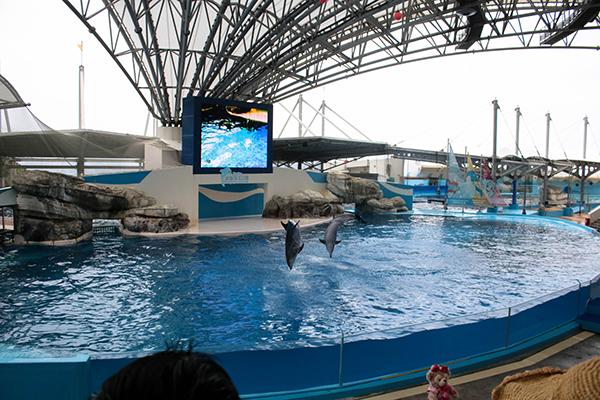 farglory ocean park live dolphin show
