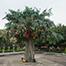 lam tseun wishing tree