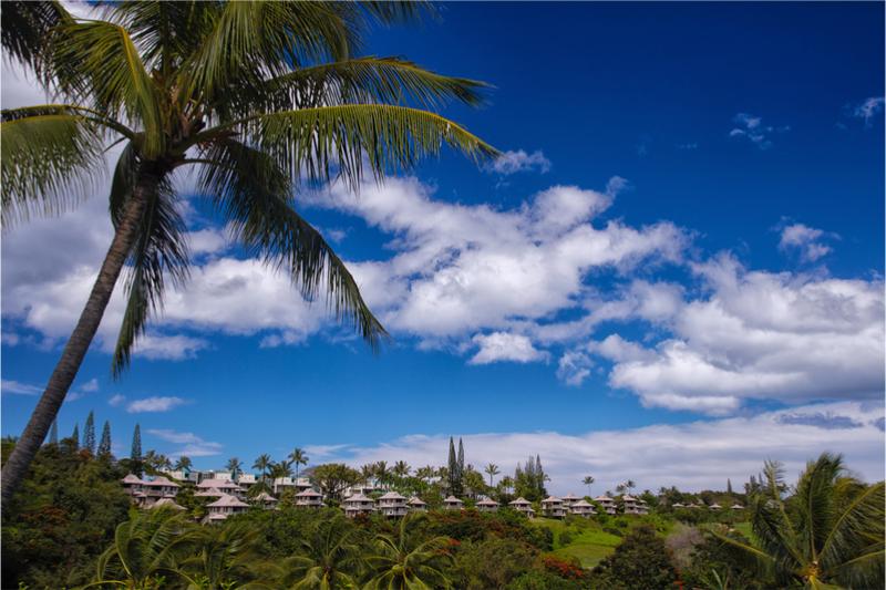 kauai-resort-palmtree