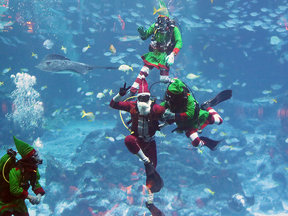 Crazy Elves Underwater Show sea aquarium