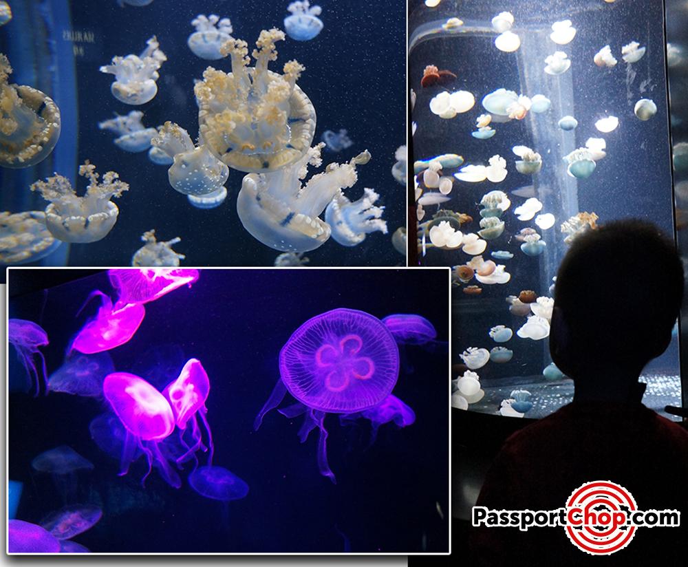 Jellyfish sea aquarium