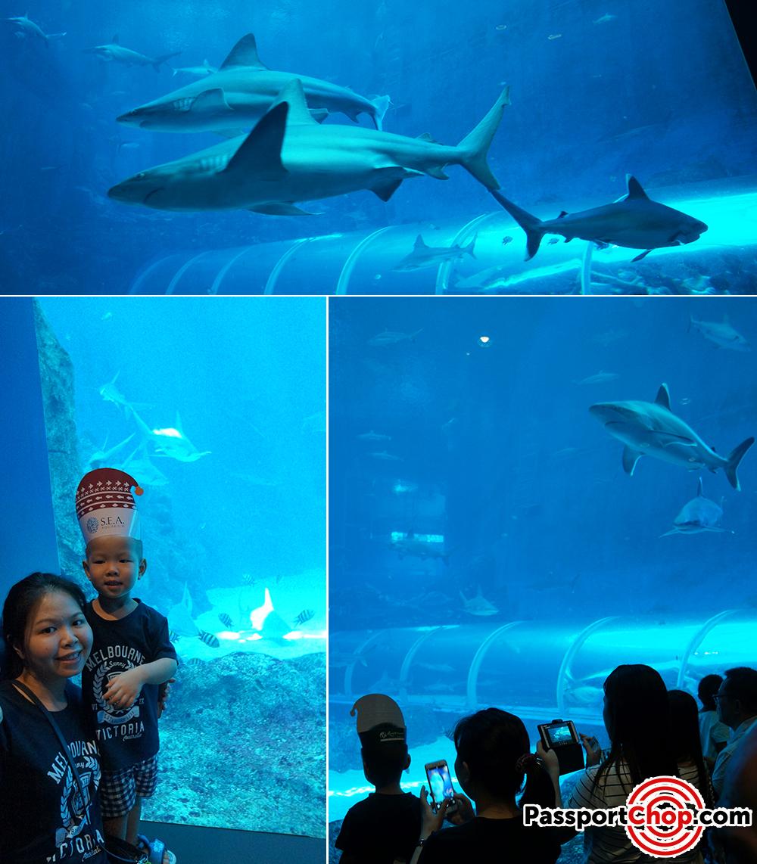 Shark Seas Habitat sea aquarium merry fishmas