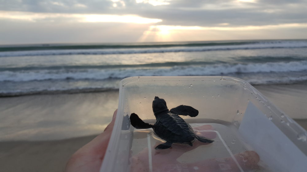 bali turtle beach release kuta