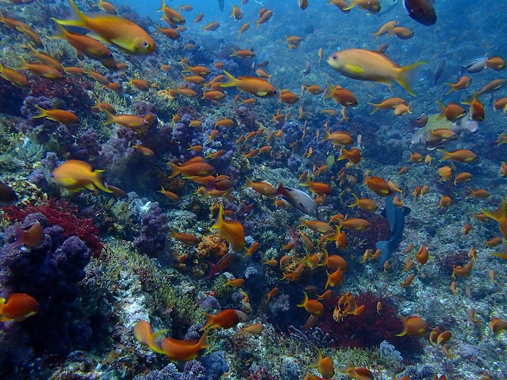 scuba diving kouzushima snorkelling