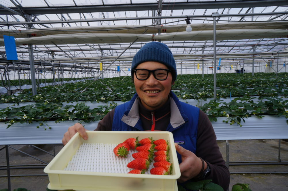 strawberry picking farm takuminosato gunma