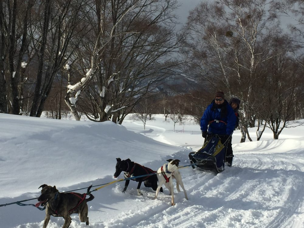 minakami ski resort dog sledding