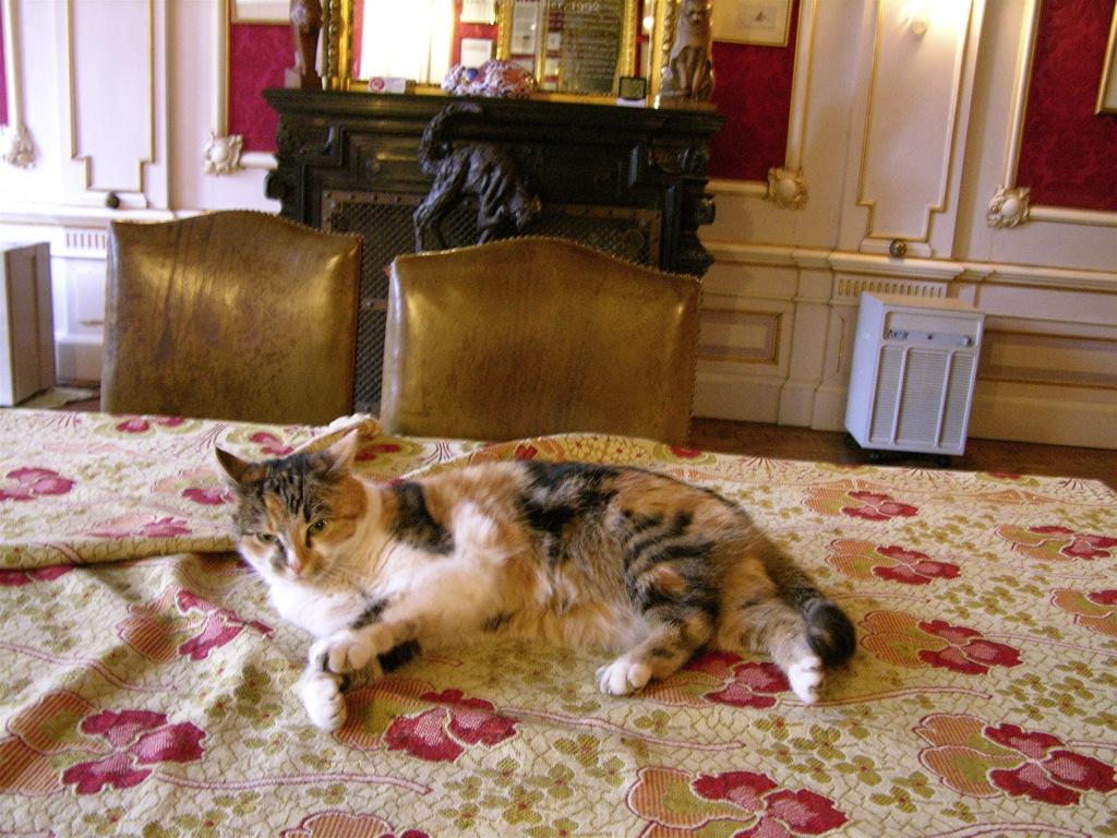 kattenkabinet amsterdam cat museum
