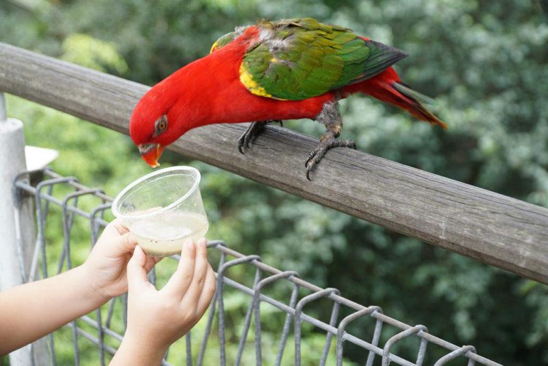 bird park jurong