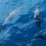 Dolphin and Whale Safari Auckland